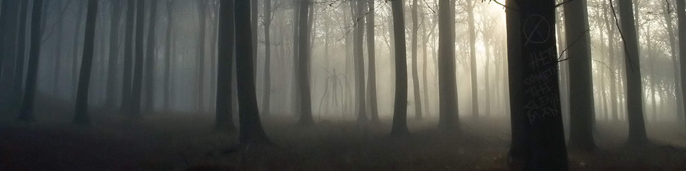 Slender_forest_2_cropped